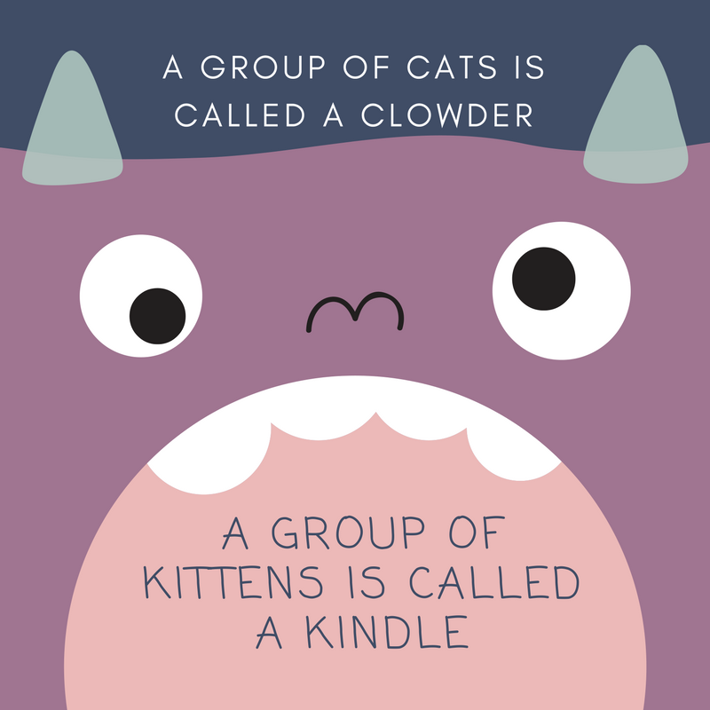 Visit to learn more about cats Books