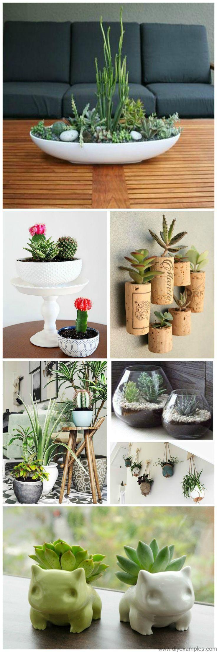 Indoor Succulent Plant Decor Ideas