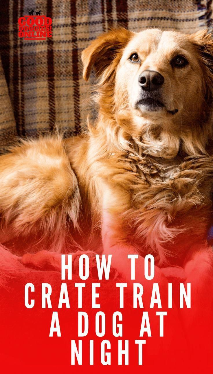 How To Get Dog To Stop Crying In Crate In The Morning Ideas