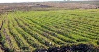 كيف تضاعف مصر الصادرات الزراعية والغذائية لـ10 مليارات دولار Outdoor Farmland Vineyard