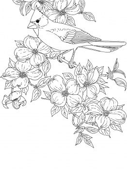 Northern Cardinal Bird Coloring Pages Bird Drawings Flower Coloring Pages