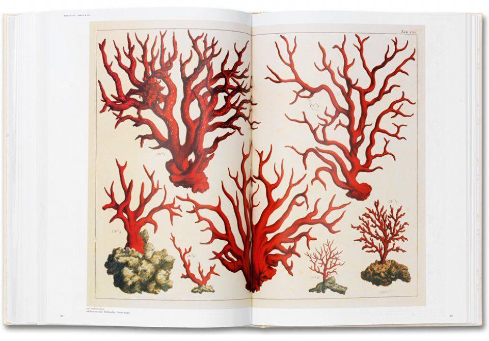 Natural Curiosities Taschen Books
