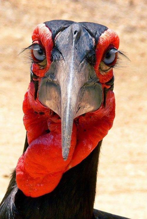 40 Aves De Bicos Estranhos Aves E Animais Ex 243 Ticos