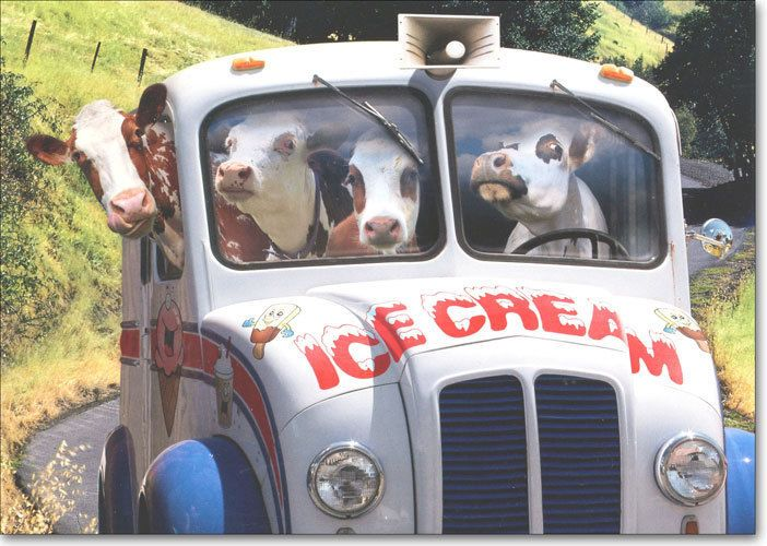 Cows In Ice Cream Truck Funny Birthday Card Greeting Card By