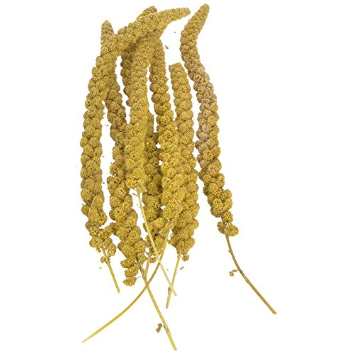 Sun Seed Company Bss10911 Small Bird Millet Spray Treats 5 Pound For More Information Visit Image Link This Is An Affili Seed Company Small Birds Seeds