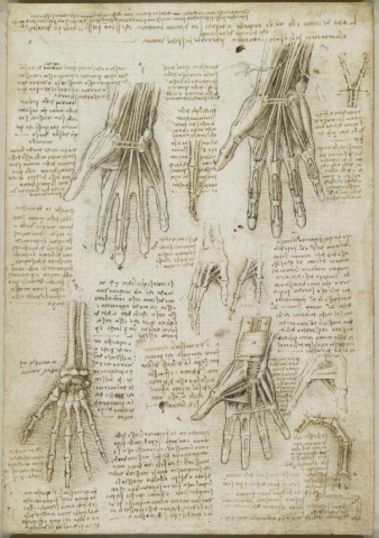 Leonardo da Vinci Anatomy References | 画力向上 | Pinterest ...