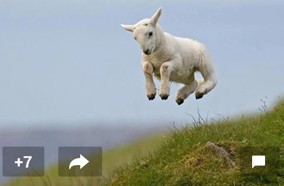 On days like this, I jump for joy, Like a springy, wind-up toy, I may just be a little lamb, But one day soon, I'll be a ram! © Caro Ness 2015