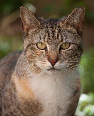 My Cat Sonnie Marie Brooklyn New York 9 3 12 Pretty Cats
