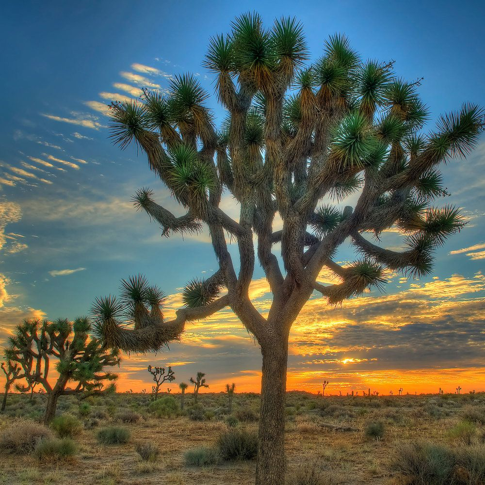 Joshua Tree: 10 Amazing Places to See in the National Park
