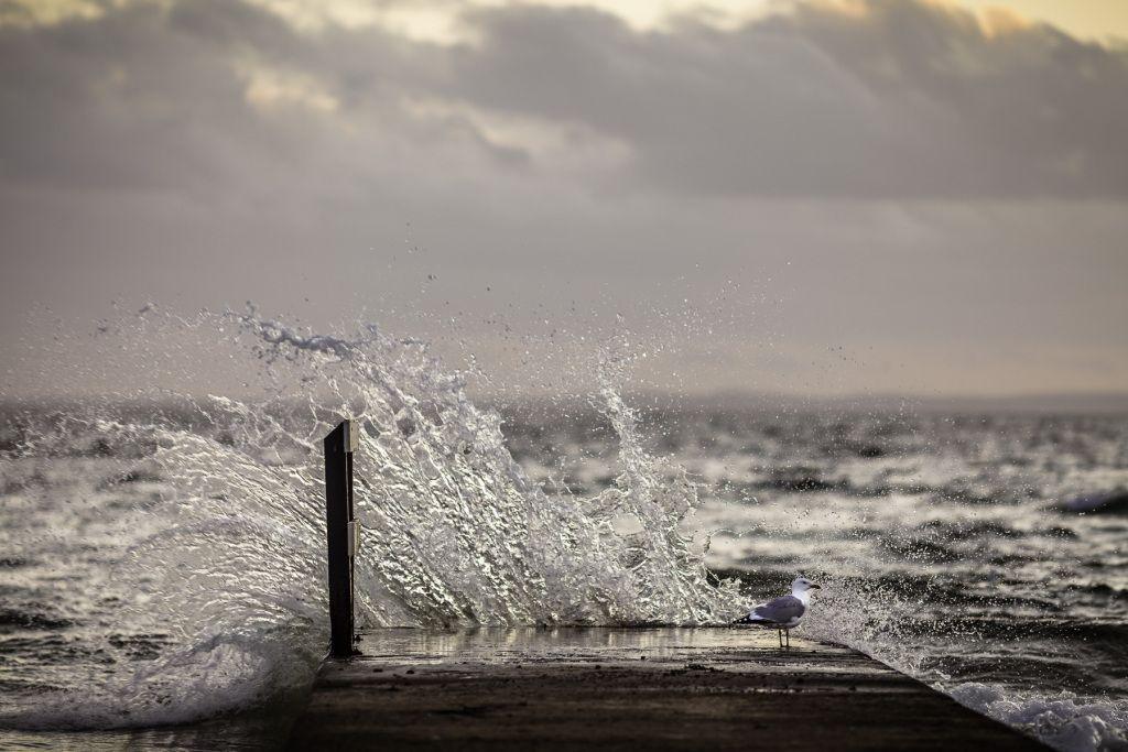 Splash II http:mabrycambell.com #image #photo #mabrycampbell #photograph #gull #splash #sweden #råå #seascape #bird #øresund #sunset
