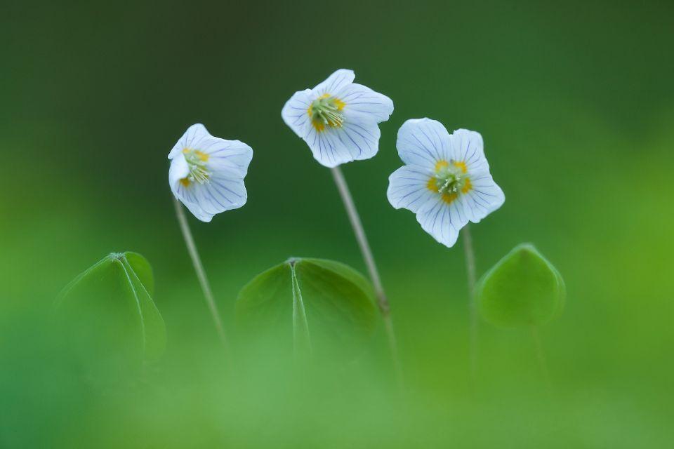 Come fotografare i fiori selvatici con un teleobiettivo