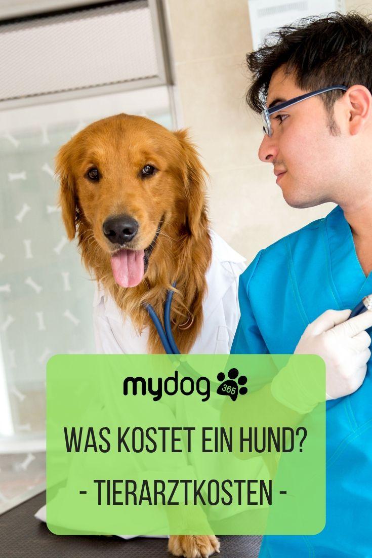 Was Kostet Was Beim Tierarzt Tierarzt Was Kostet Ein Hund Tiere