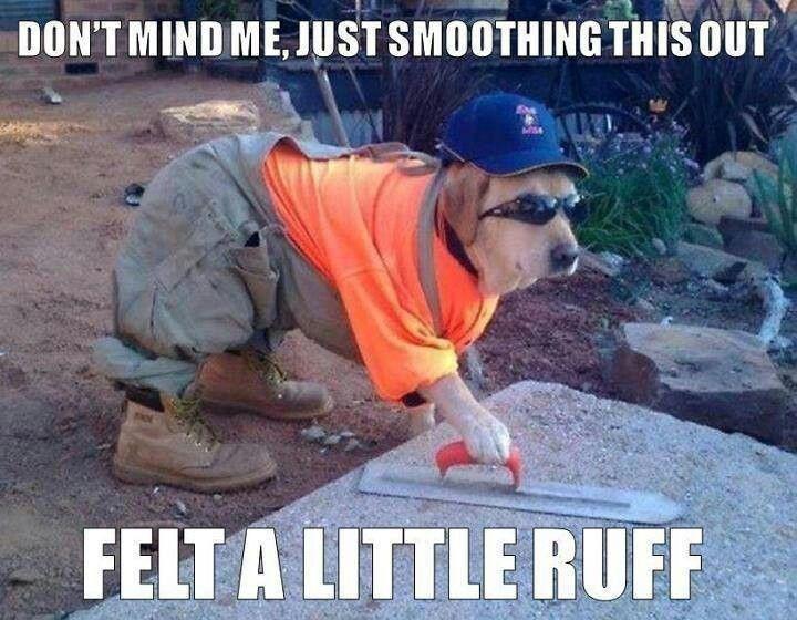 Hard Working Dog Karen Memes Funny Animal Memes Funny Animal Pictures