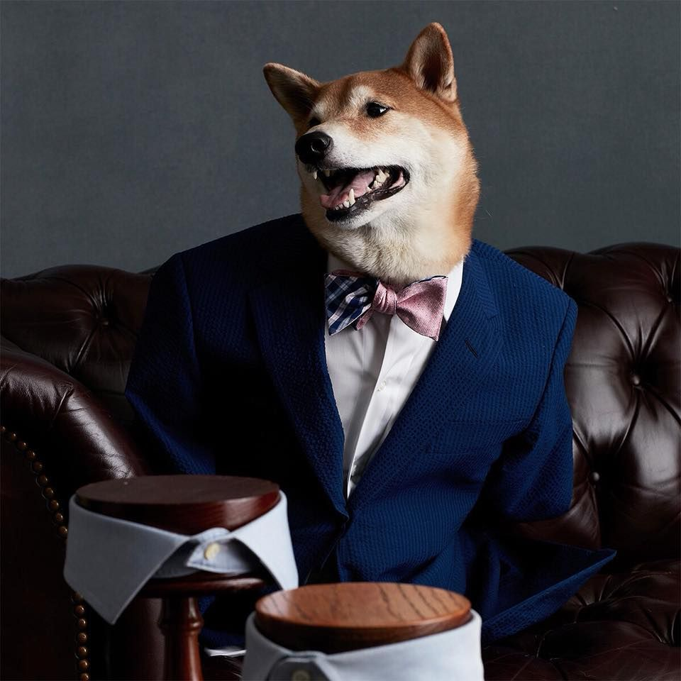Dog with awesome dress up : Menswear