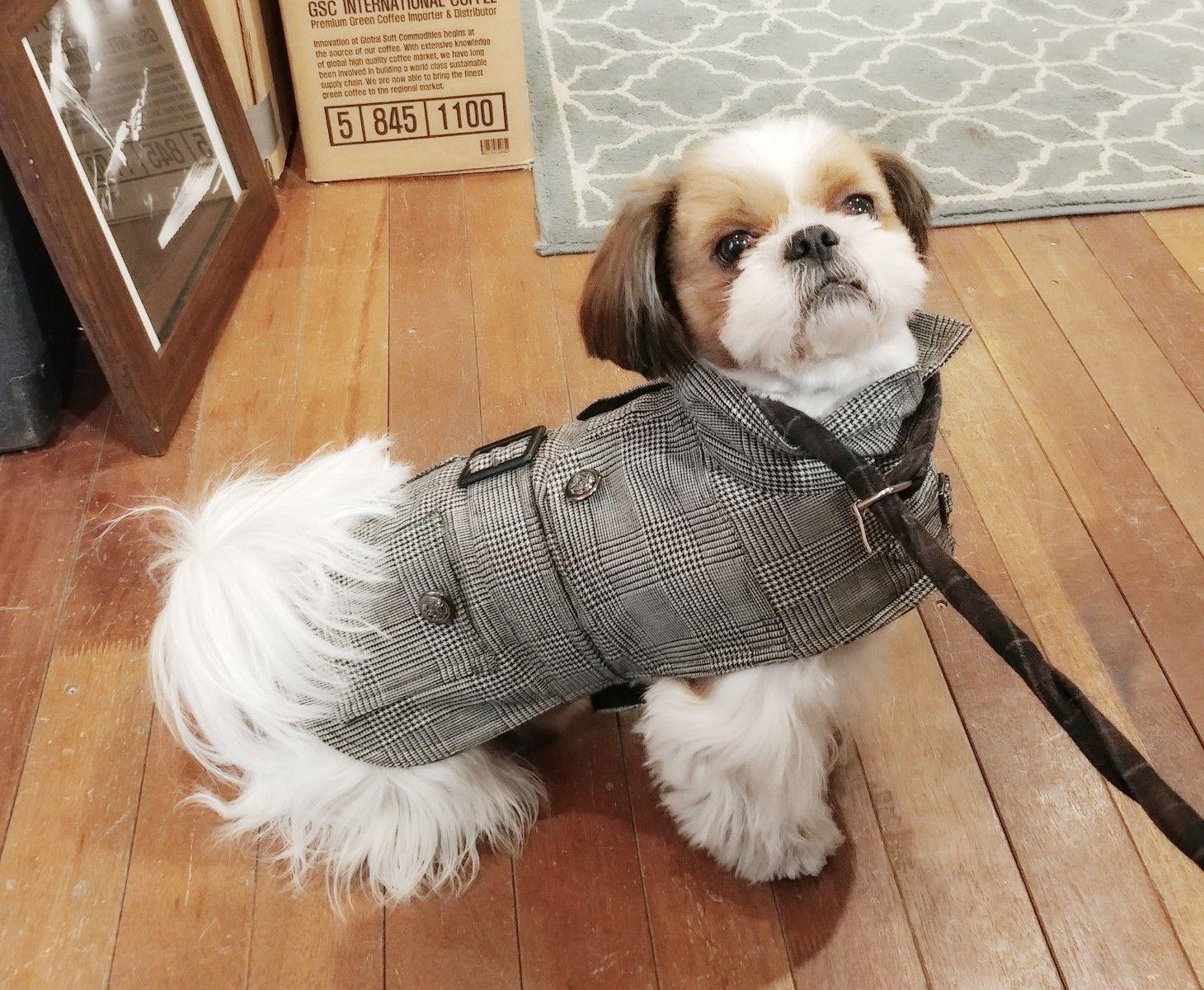 Shih tzu haircut styles shih tzutoto  shih tzu cuties  pinterest  shih tzus dog and doggies