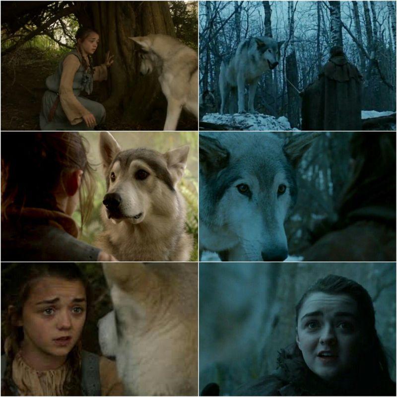Arya Nymeria Season 1 7 With Images Arya Stark Game Of