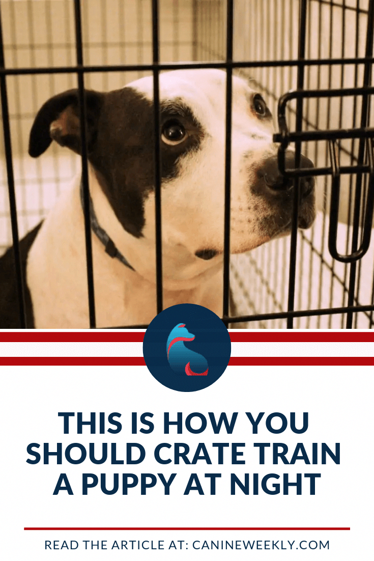 How Should You Crate Train A Puppy At Night Get Here The Simple Guide On How To Train Your Puppy At Night Re Puppy Training Crate Training Dog Crate Training
