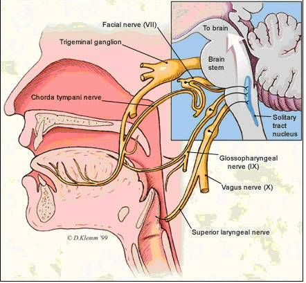 Physiology of Oculomotor Nerve, Trochlear Nerve and Abducens Nerve ...