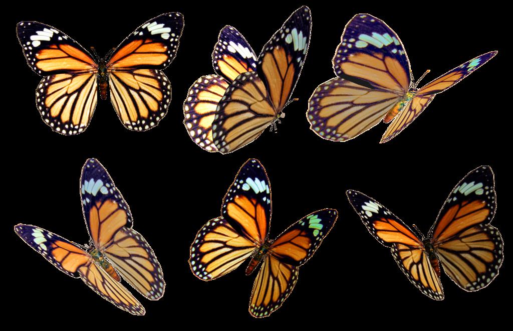 Butterflies 4 Png Stock Butterfly Clip Art Butterfly Butterfly Drawing