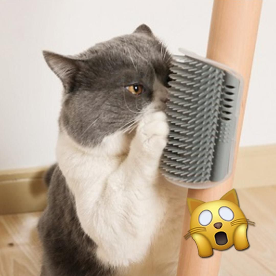 Pin On Raising Happy Cats