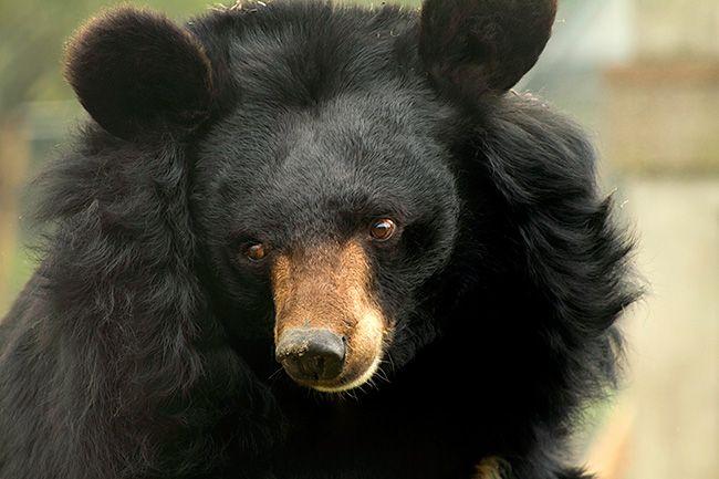 Healing Moon Bears | Julie ONeill Photography.