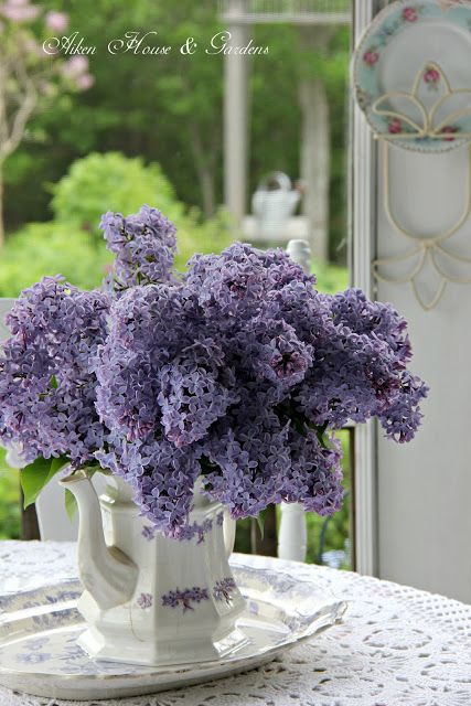 It S Lilac Season In Our Garden Lilac Lilac Bouquet