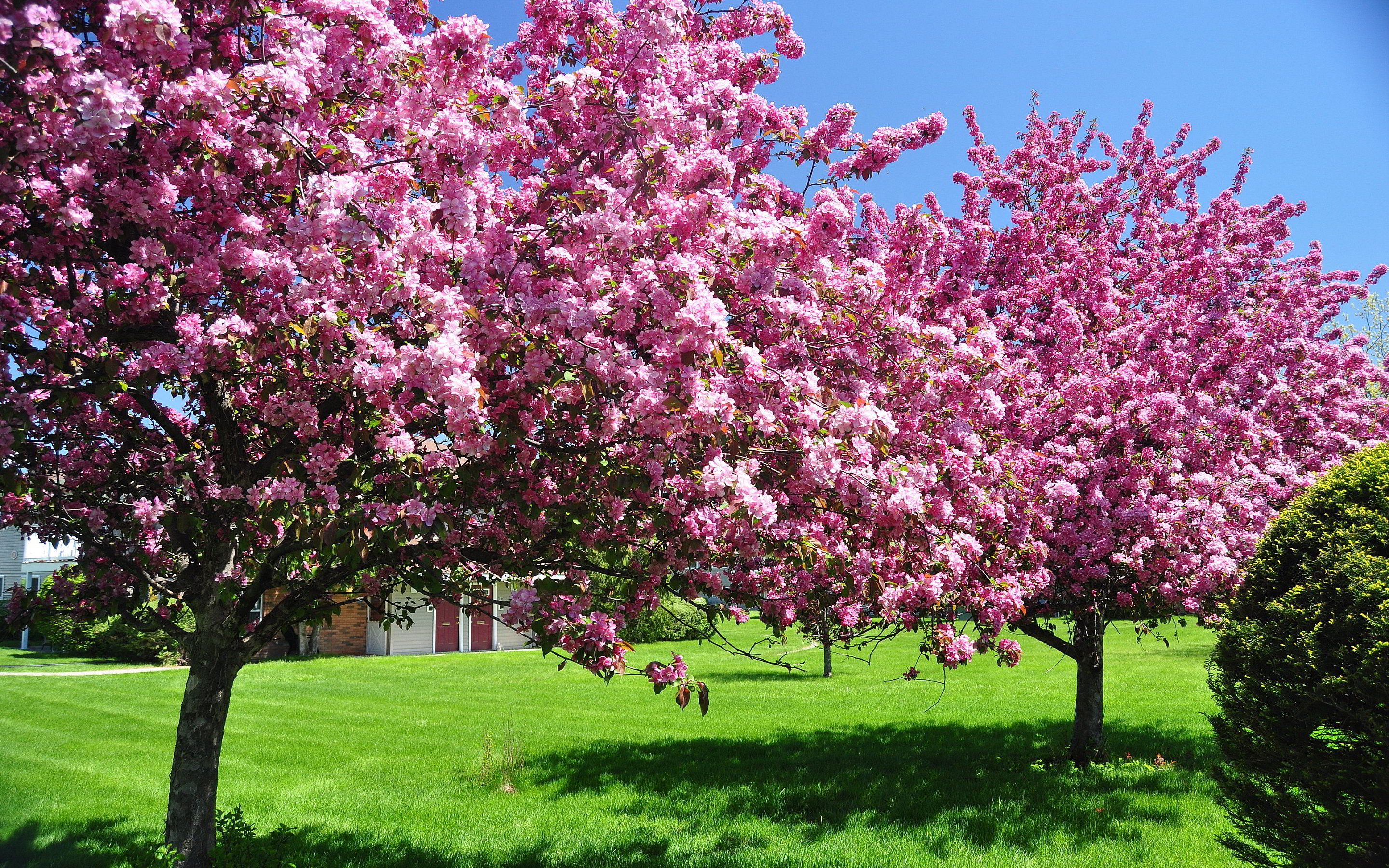 Spring Flowers Background Spring Blooming Trees Wallpapers