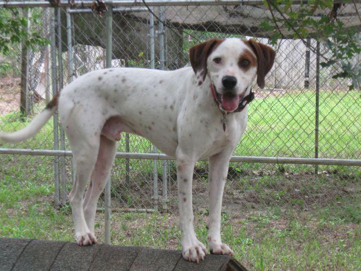 Park Art My WordPress Blog_Dachshund Puppies For Sale In Columbia Sc