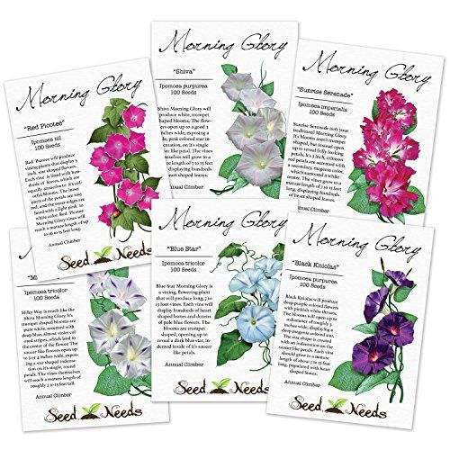 Morning Glory Seed Packet Assortment 6 Individual Seed