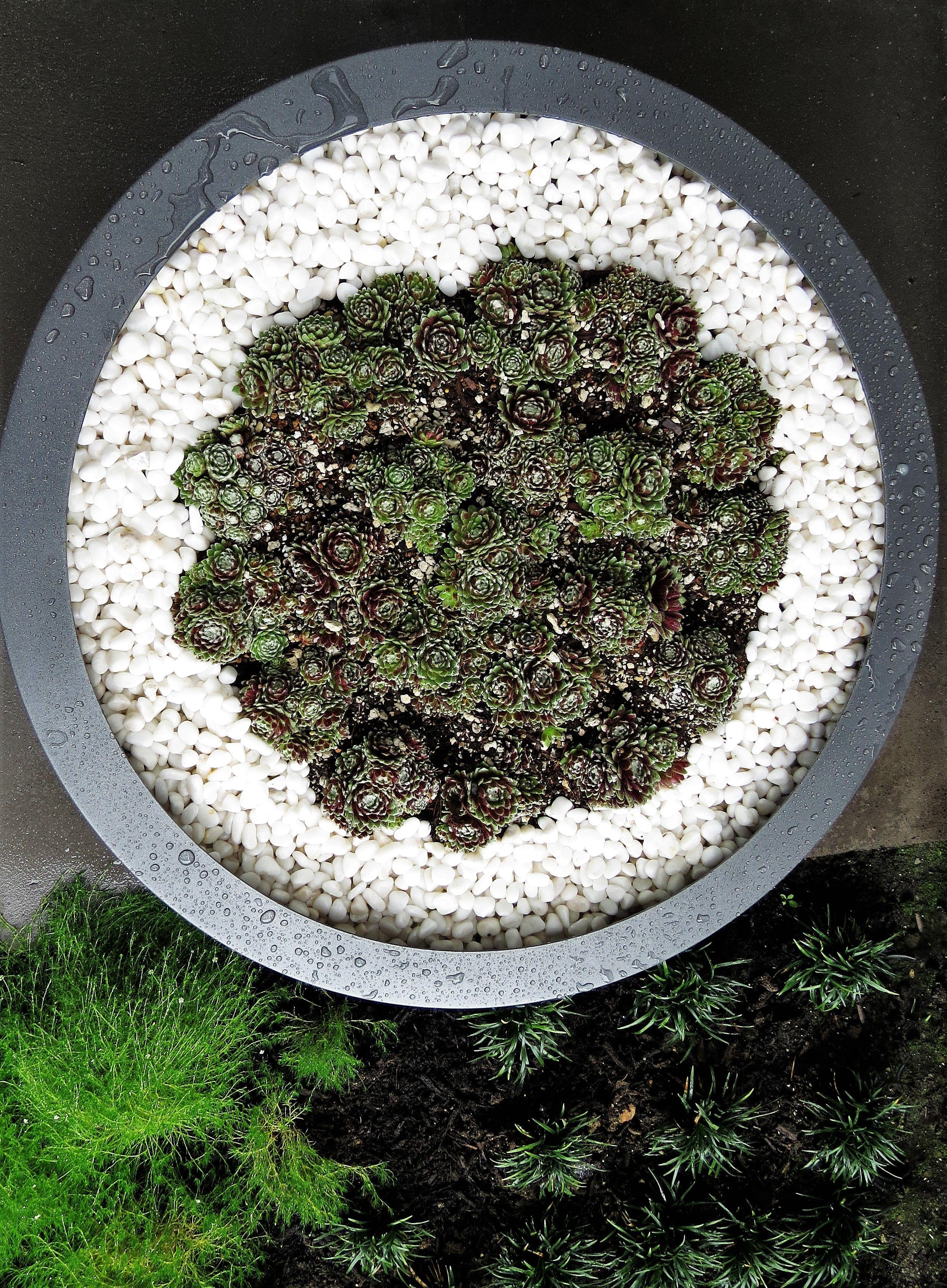 Contemporary planter, minimal design | Contemporary ...
