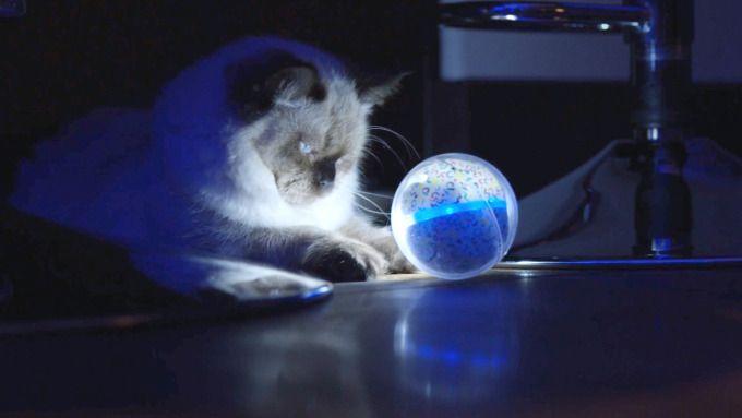Pebby makes long-distance pet relationships more fun #Startups #Tech