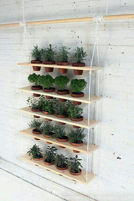 Pin by fitria rahmawati on garden | Pinterest | Gardens, Plants and ...