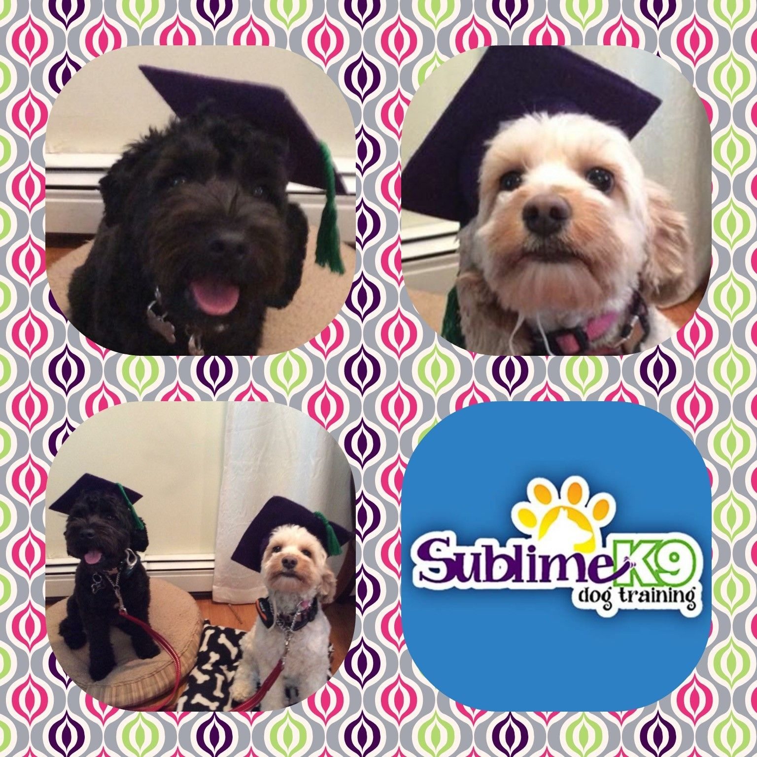 Long Island Dog Trainers Sublime K9 Dogs Therapy Dogs Dog