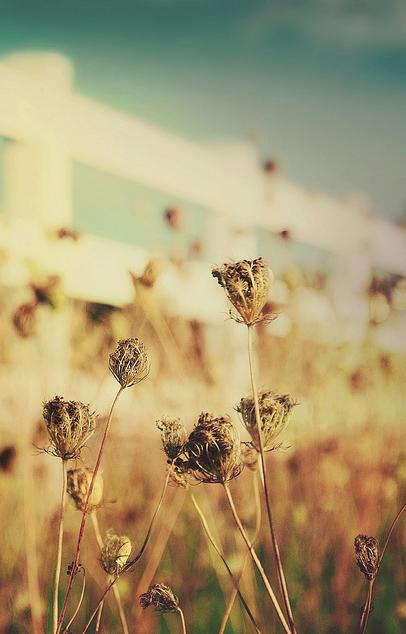 Scorching hot summer fields