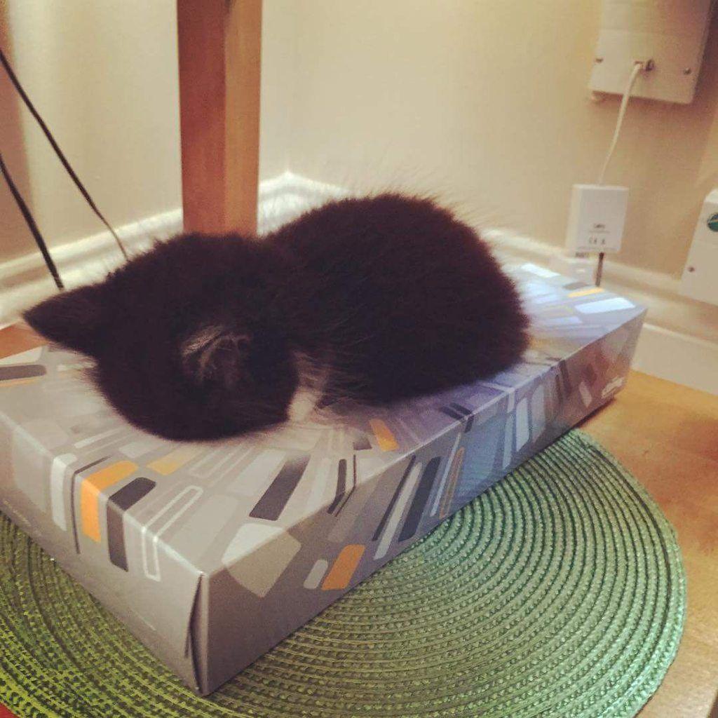 Kitty asleep in a tissue box.