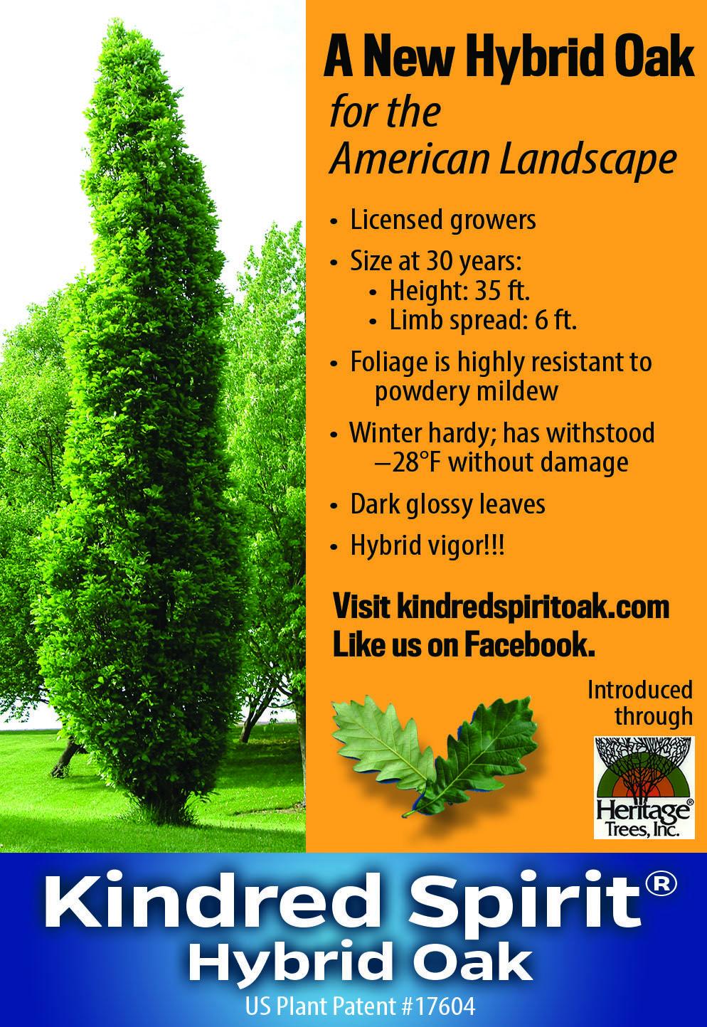Kindred Spirit Hybrid Oak United States Plant Patent 17604 Family Tree Designs Oak Tree Wedding Oak Tree