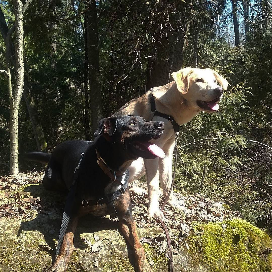 Can I Go Nowhere With You Wyattderp Rescuedog Rescuemutts Adventurethatislife Hikewithdogs Adoption Positivetraining Positive Training Rescue Dogs Dogs