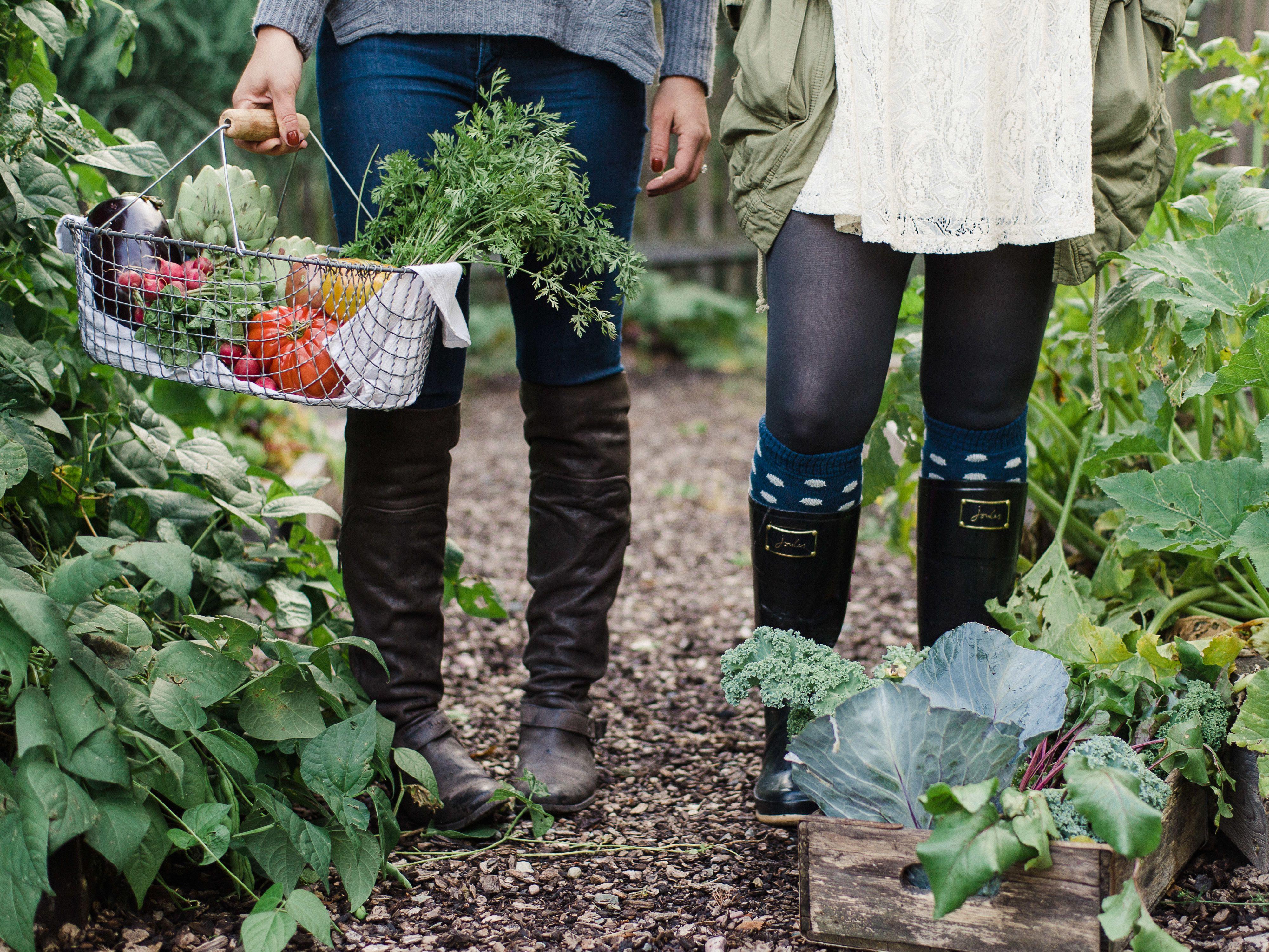 Kitchen Garden Farm Pin By Artars On Gardengarden Partiesherbs Pinterest Gardens