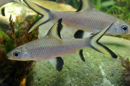 Freshwater Shark Alert Features
