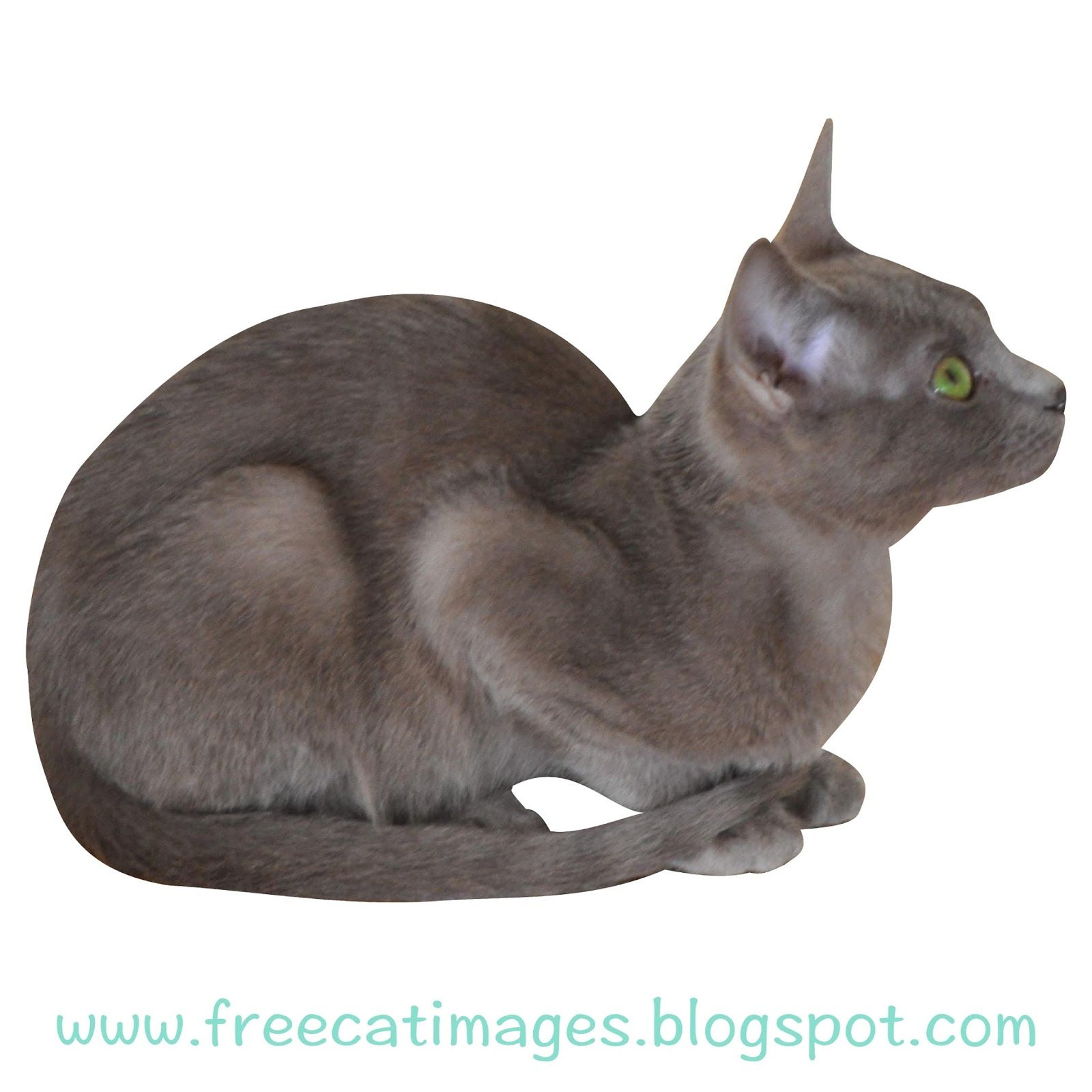 Free Cat Images Free digital cat cut out with transparent