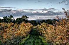 Jardins de Hatley: argoustiers