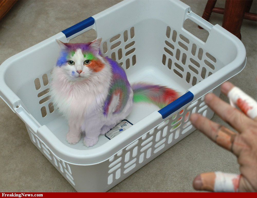 Tie Dyed Cat Dog cat pictures, Cat pics, Funny cat pictures