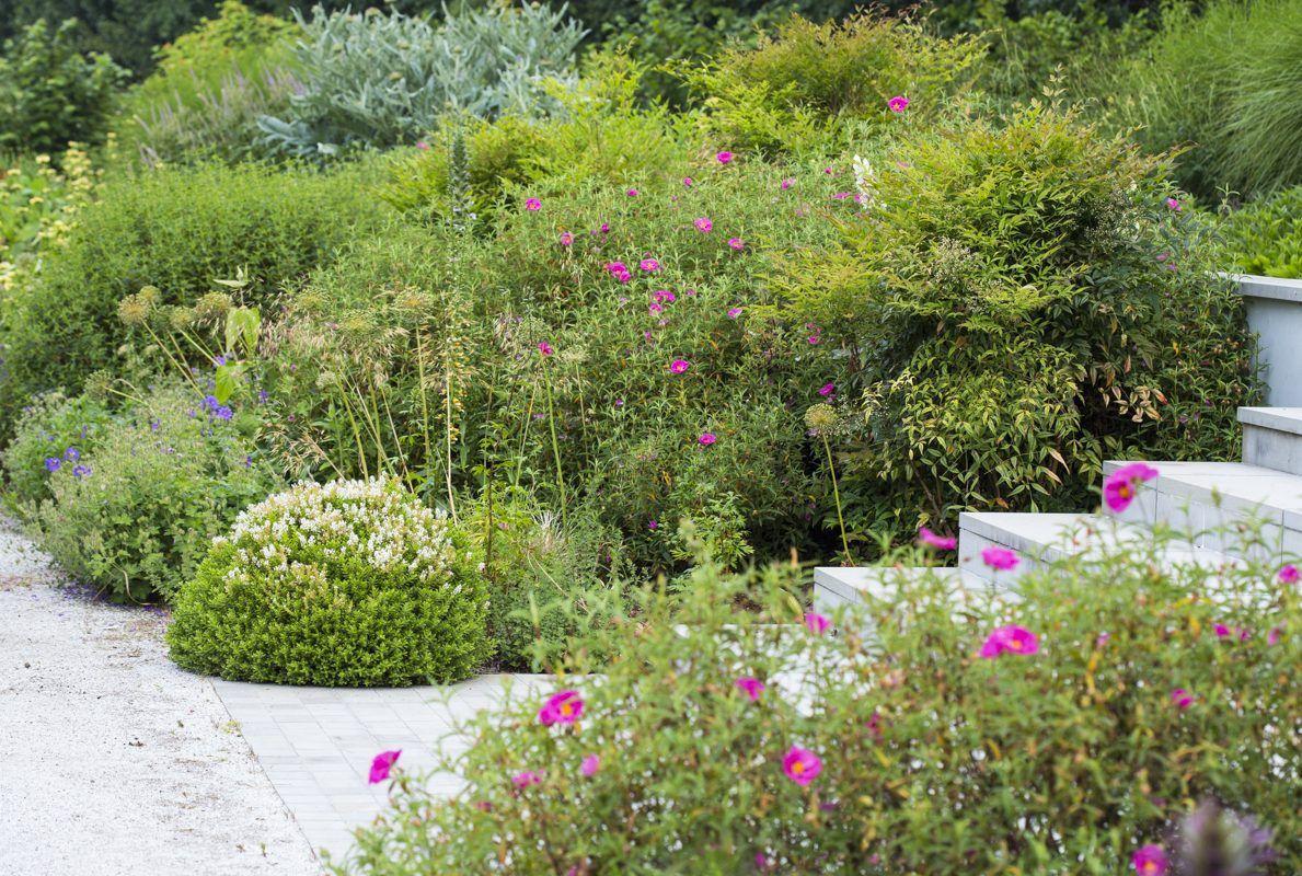 Garden Design Surrey Sussex House Case Study Andy Sturgeon Garden Design Garden Design Sussex Gardens Modern Garden Design