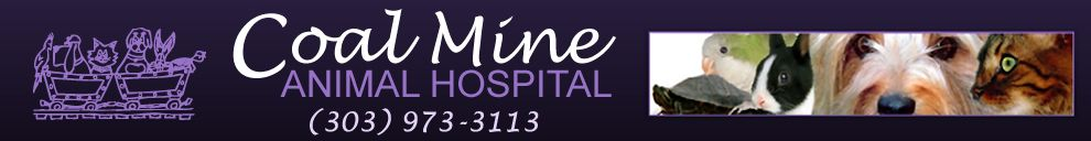 18+ Coal mine animal hospital ideas