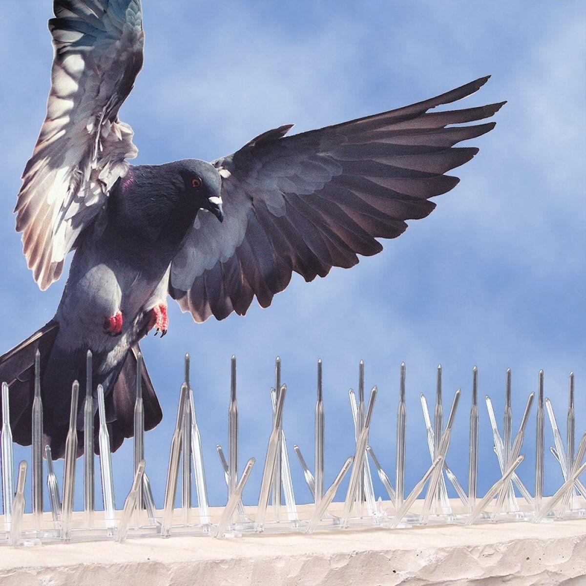 Plastic Bird Deterrent Spikes 5 in x 6 ft