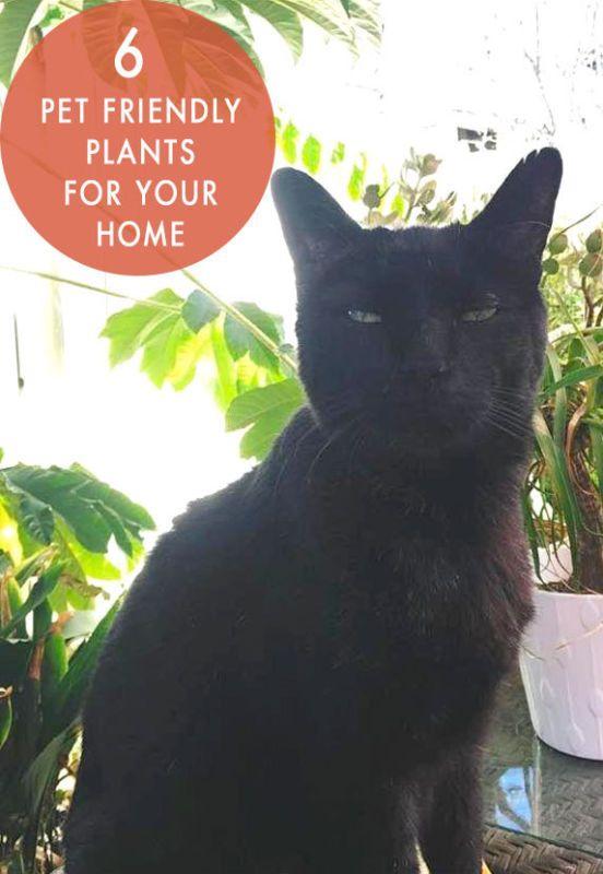 6 Pet Friendly Plants for your Home! Cat safe plants