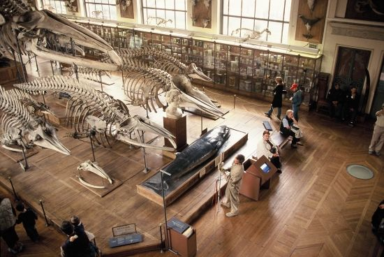 Croatian Natural History Museum Zagreb Croatia Museums And Galleries Culture New Experience Cultural Events Tr History Museum Zagreb Natural History