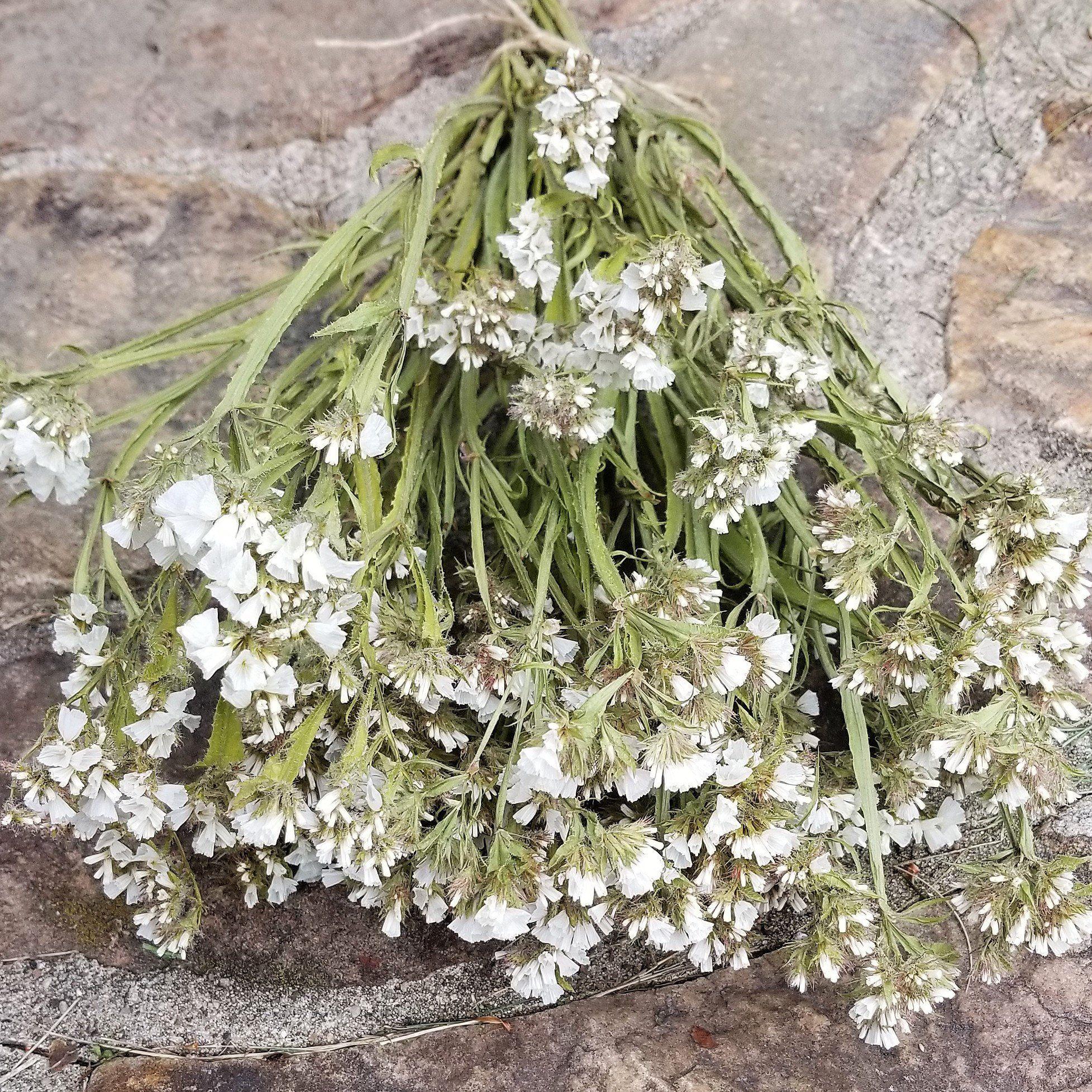 Dried white statice limonium sinuatum dried flowers white flowers dried white statice limonium sinuatum dried flowers white flowers wedding flowers mightylinksfo