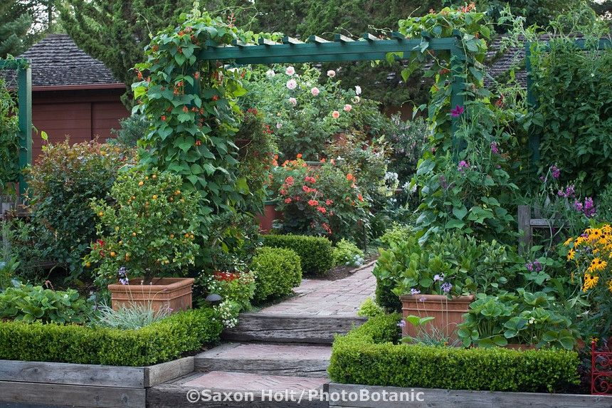 Front Yard Trellis Ideas Part - 30: Front Yard Entry To Organic Edible Landscape Garden With Scarlet Runner  Beans On Trellis Over Path