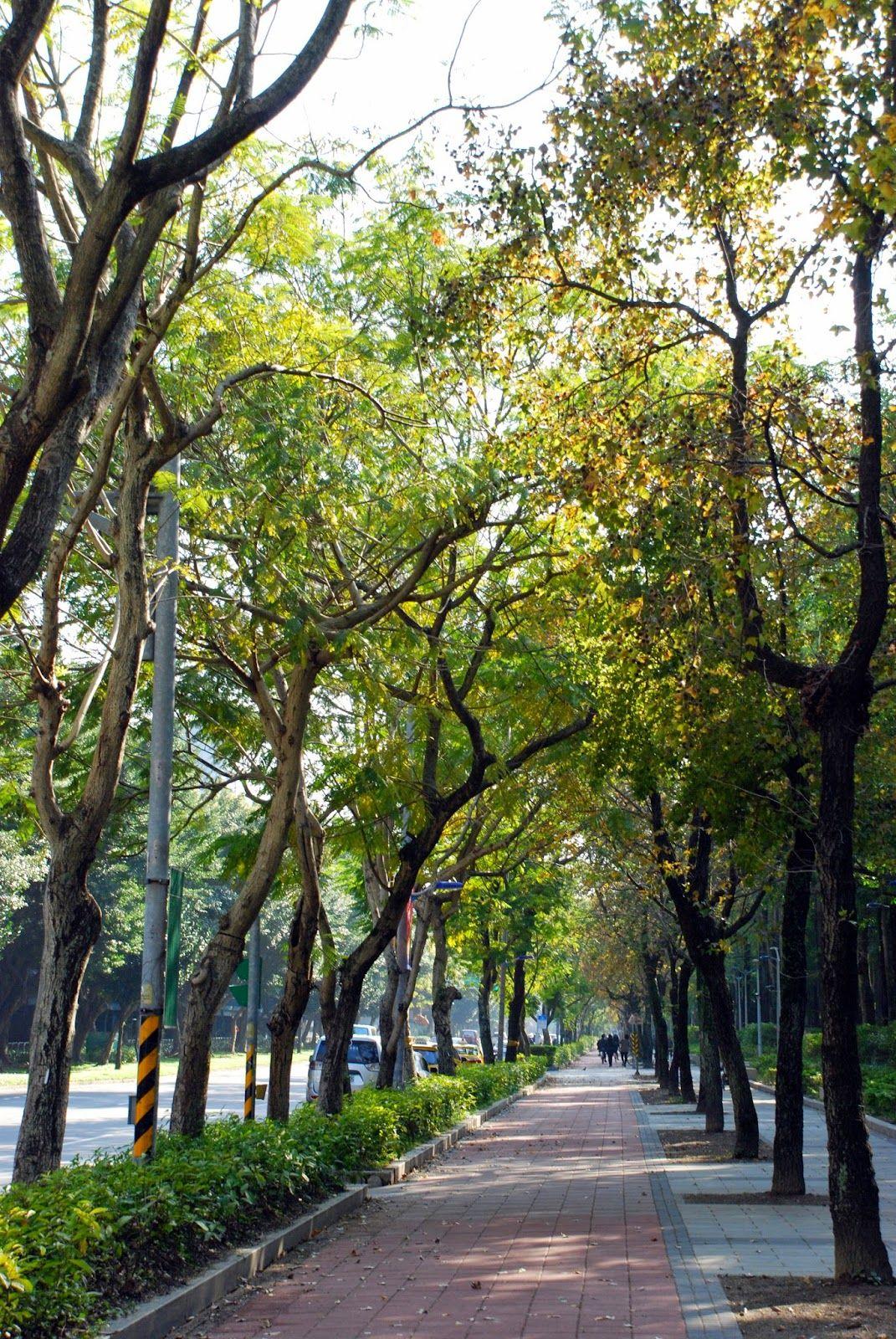 大安森林公園每日遊人如織 尤以晨間及夕陽初照之際為最多訪客 26公頃純休閒性 都市森林 型態的公園 可以滌塵淨化空氣 漫步園內 處處美景 享受 森林浴 大安森林公園位在新生南路 和平東路 建國南路 信義路的交界處 公園外人行道臨建國南路為盾柱木 和平